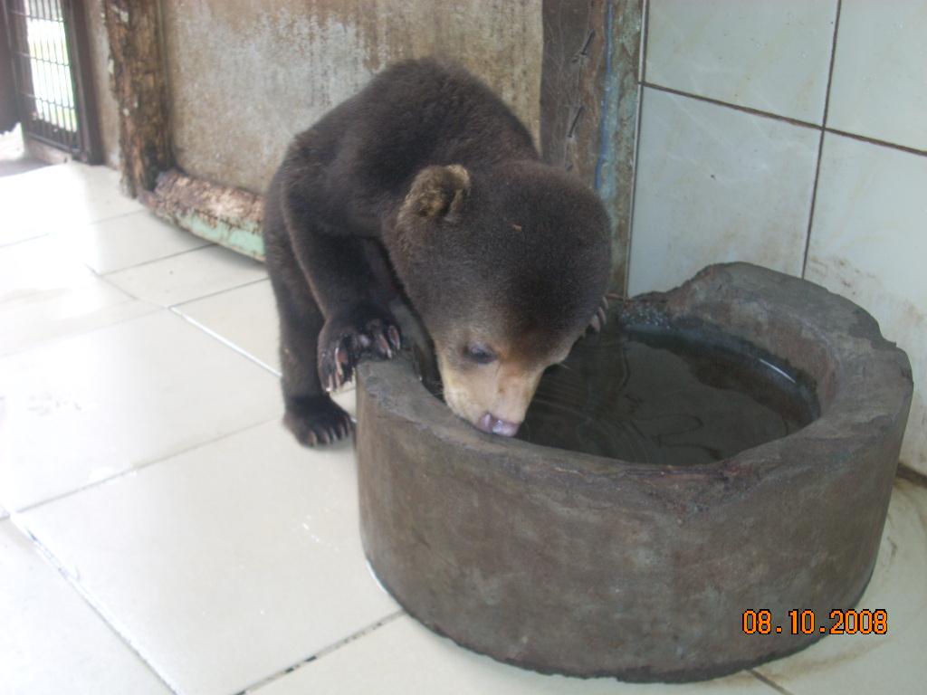 杭州野生动物世界一个刚出生不久的小马来熊宝宝被