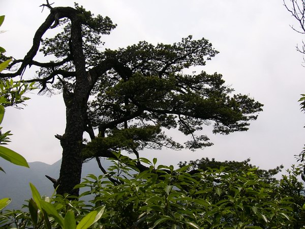 b>      ssi          b>   名称: 大平山风景之七 产地: 桂平