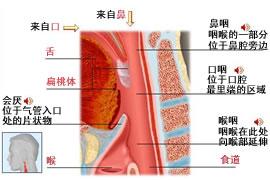 鼻子解剖图彩图