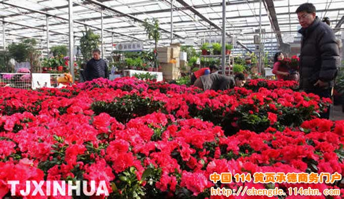 天津农垦花卉批发市场(和平区)