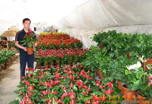 """全国重点花卉市场""""; 2001年被上海大世界基尼斯之最评为&ldquo"""