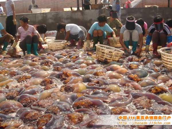 乐亭海鲜批发市场图片