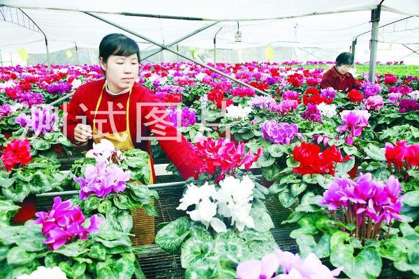 天津北方花卉样板展示-全国批发市场导航网