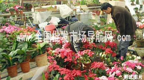 天津东兴花卉市场-全国批发市场导航网
